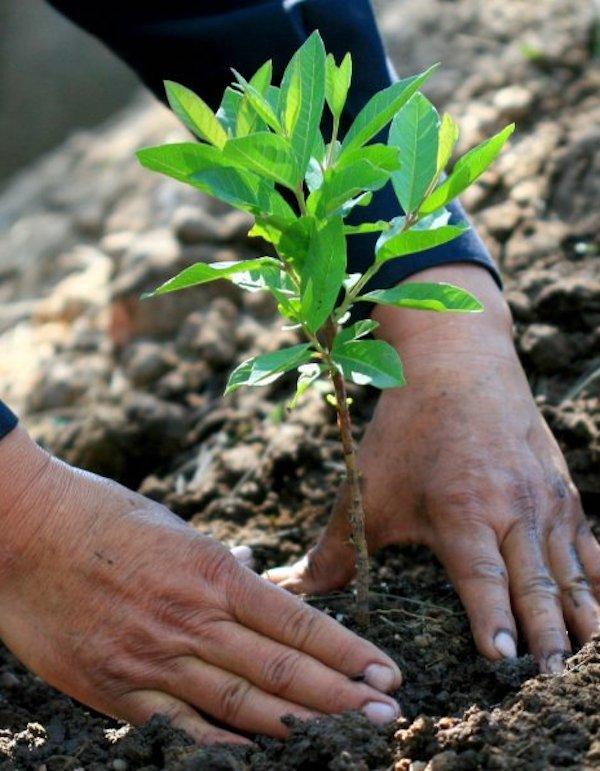 Sembrar árboles y conciencia para la lucha contra el cambio climático en Costa Rica