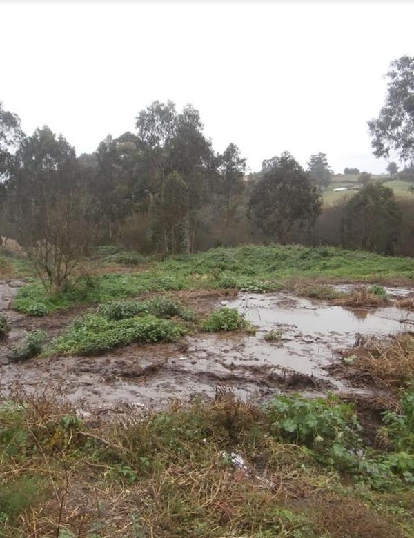 Asturias quiere utilizar purines como fertilizante en suelo forestal