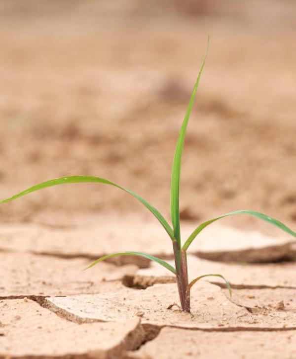 Danone se suma con 2.000 millones para para luchar contra el cambio climático