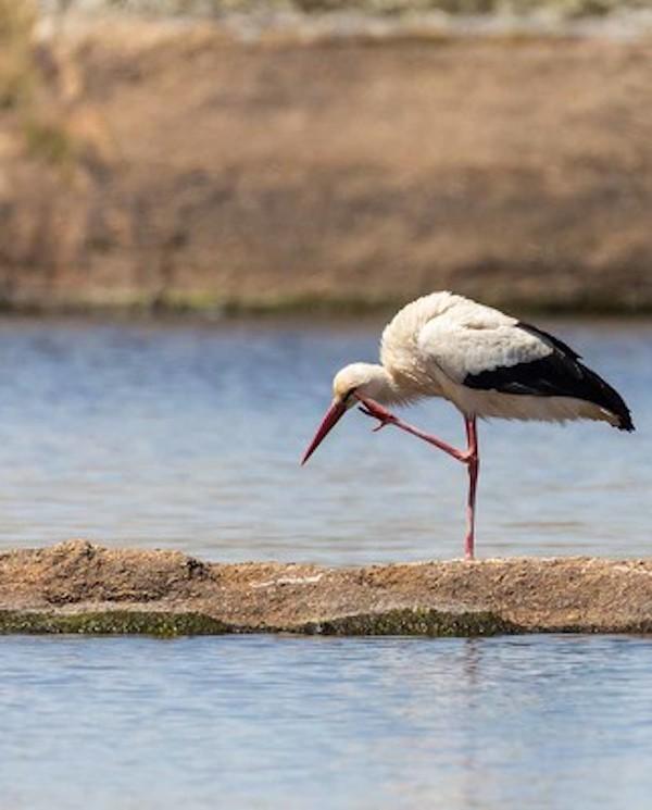 El 'tremendo' impacto de pesticidas en la avifauna de los Parques Nacionales de Doñana y de Las Tablas de Daimiel