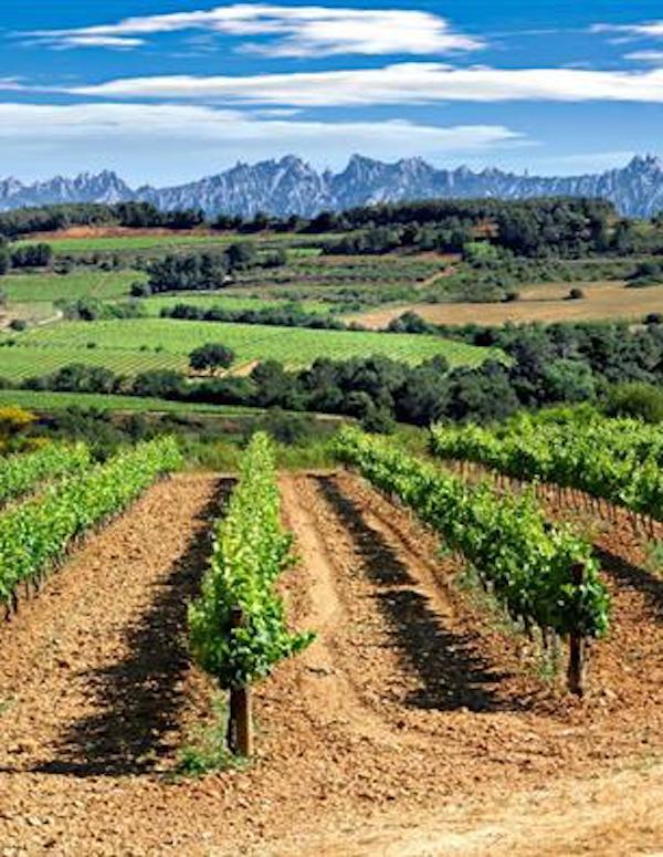 La diversidad de los viñedos paliará la crisis climática