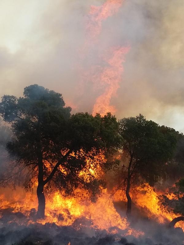 La 'España Vaciada' incrementará los incendios de alta intensidad en España