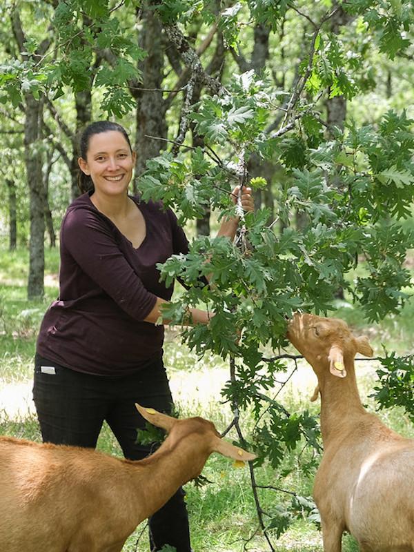 Las 'cabras' son una gran contención de los incendios forestales