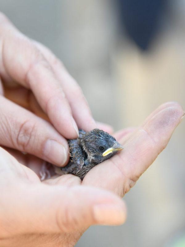 Implementan en la capital de España 360 cajas nido de aves insectívoras