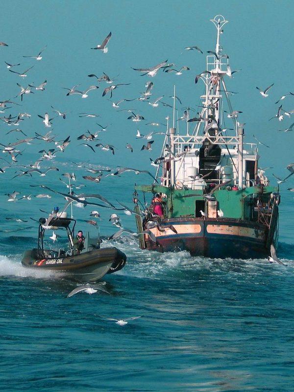 España siempre a la cola, y ahora acelera los trabajos de elaboración de una estrategia de lucha contra la pesca accidental