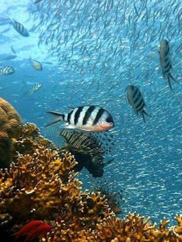 El apareamiento de muchas especies de peces en peligro por el cambio climático