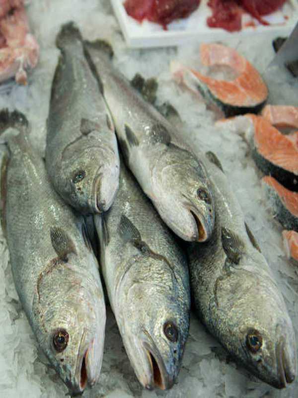 Mercurio, cadmio o el plomo en nuestros pescados