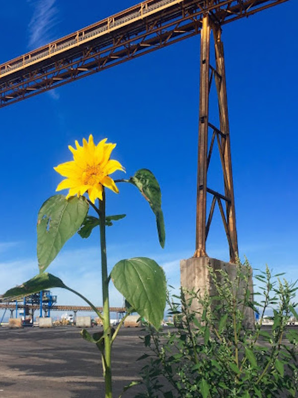 El Port de Tarragona reducirá a cero su huella de carbono en 2030