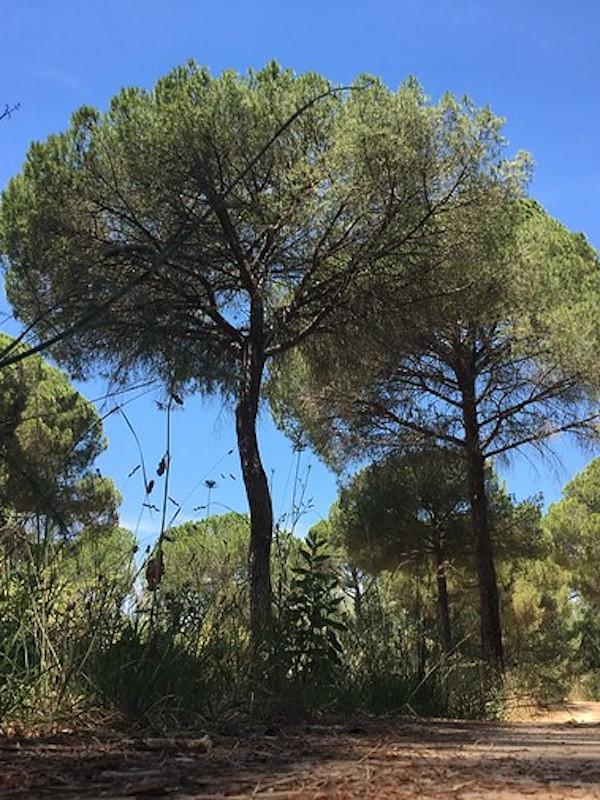Propuestas para conseguir una 'Doñana Inmaculada'