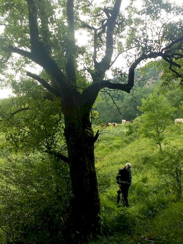 Navarra. Arakil pone en marcha una iniciativa para recuperar la biodiversidad del valle