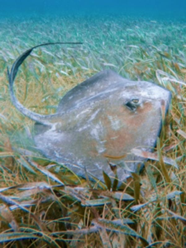 Trabajando para asegurar el futuro de tiburones y rayas en el Mediterráneo
