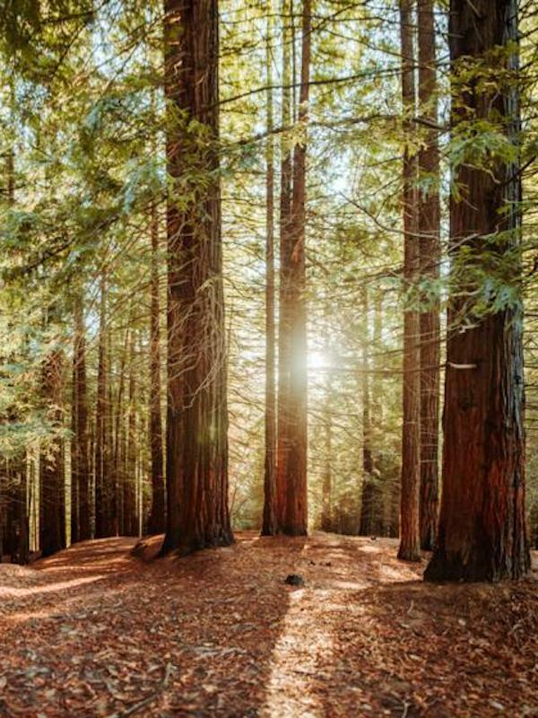 Más de 50 investigadores logran tras 10 años de trabajo un método para monitorizar los bosques más olvidados del trópico