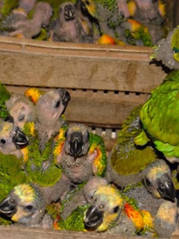 España luchará contra el tráfico de especies silvestres