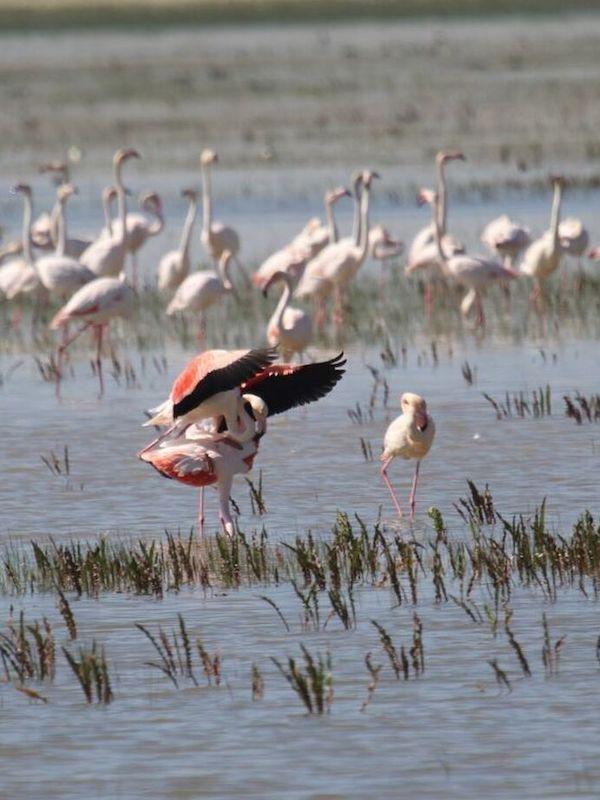 Cuarenta problemas desde 25 municipios del estuario del Guadalquivir amenazan la salud de Doñana