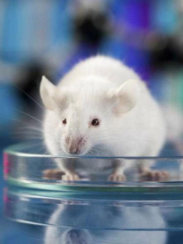 Una amplia mayoría de españoles está en contra de que se experimente con animales