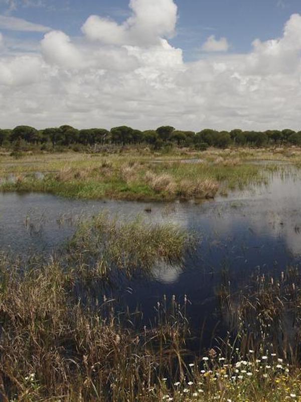 Confirmado, el acuífero de Doñana esta sobreexplotado