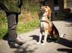 Nace la asociación GosSOS para dar respuesta a la sensibilización animalista de Andorra