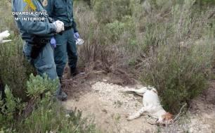 Investigan a una persona en Lucena (Córdoba) por el uso ilegal de veneno contra animales domésticos