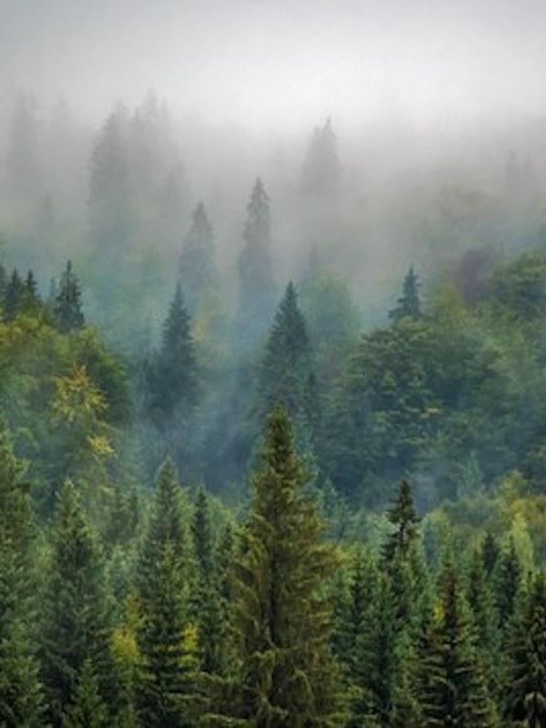 En foro mexicano sobre el mes del bosque, reconocen ciudadanos su papel clave en la defensa de este ecosistema