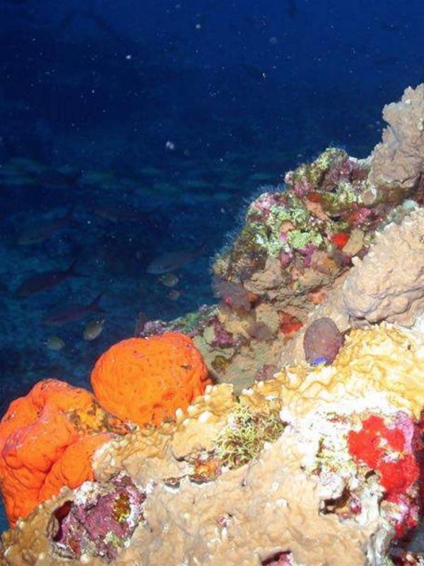 Minería submarina y sus efectos nefastos para el Planeta