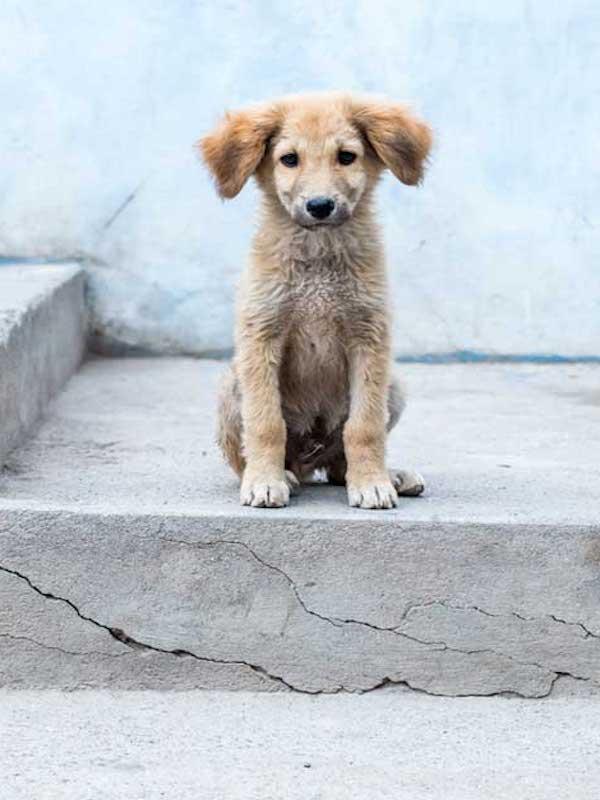 Siete de cada diez perros en todo el mundo viven abandonados