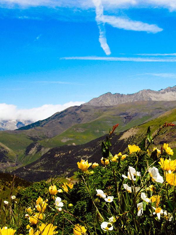 Aragón lanza un nuevo proyecto didáctico sobre la flora y la fauna autóctonas