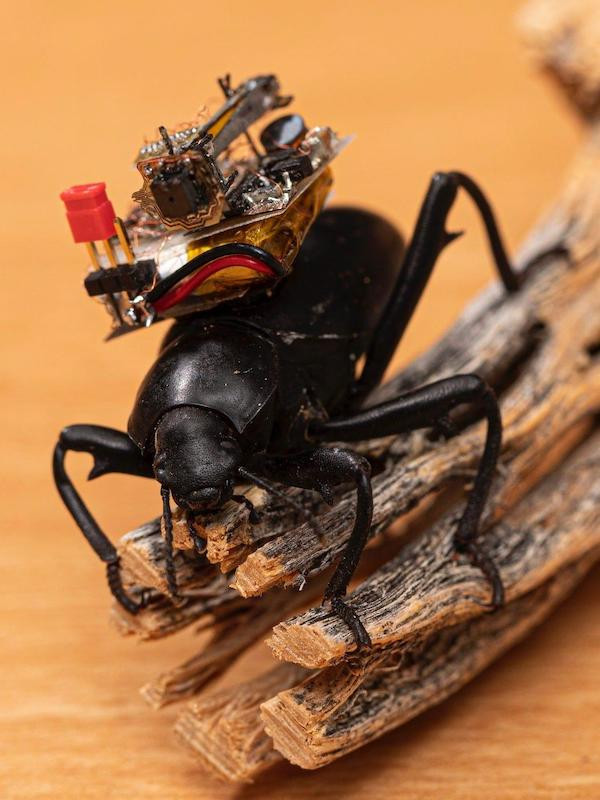 Una diminuta cámara robótica permite ver como un insecto