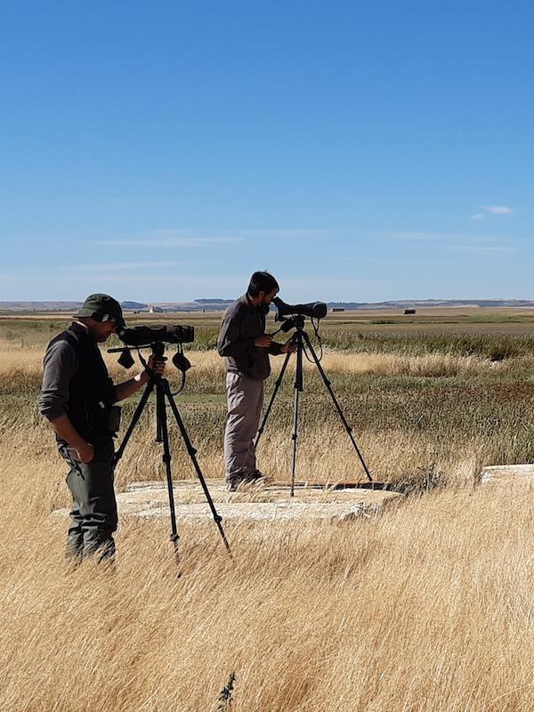 Las pequeñas aves palustres migratorias en el punto de mira
