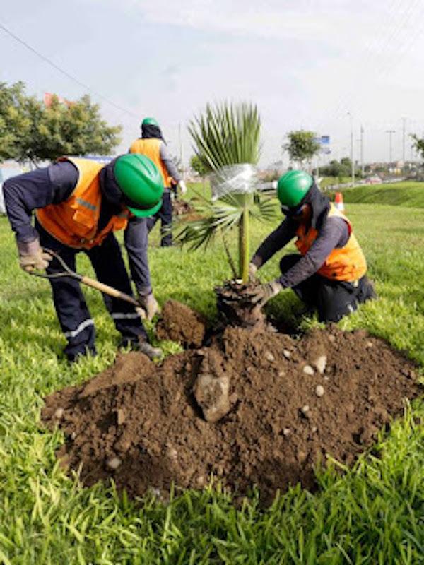Impulsar la conciencia ciudadana mexicana en el cuidado de áreas verdes
