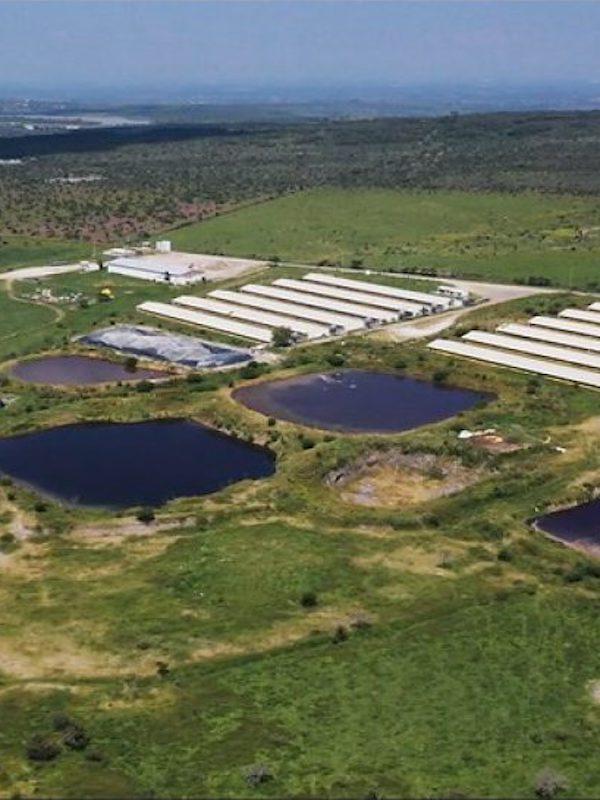 México. Un dron muestra la catástrofe medioambiental de las granjas de cerdos