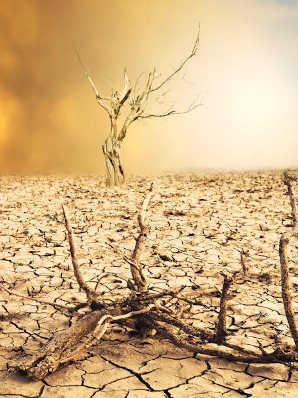 Primer aniversario en Sevilla de la 'Declaración del Estado de Emergencia Climática y Ecológica'