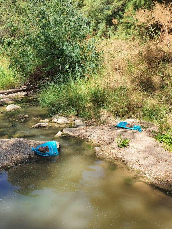 Tres galgos apaleados y arrojados a un río en Sevilla