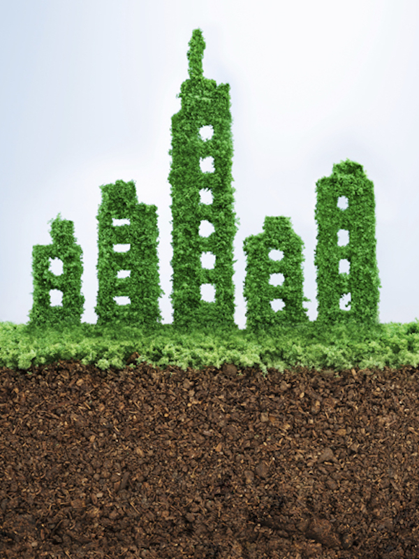 México. Los árboles urbanos pueden ayudar a un desarrollo sostenible con el apoyo de una política adecuada