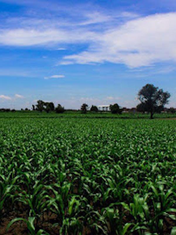 México organiza seminario internacional de agroecosistemas