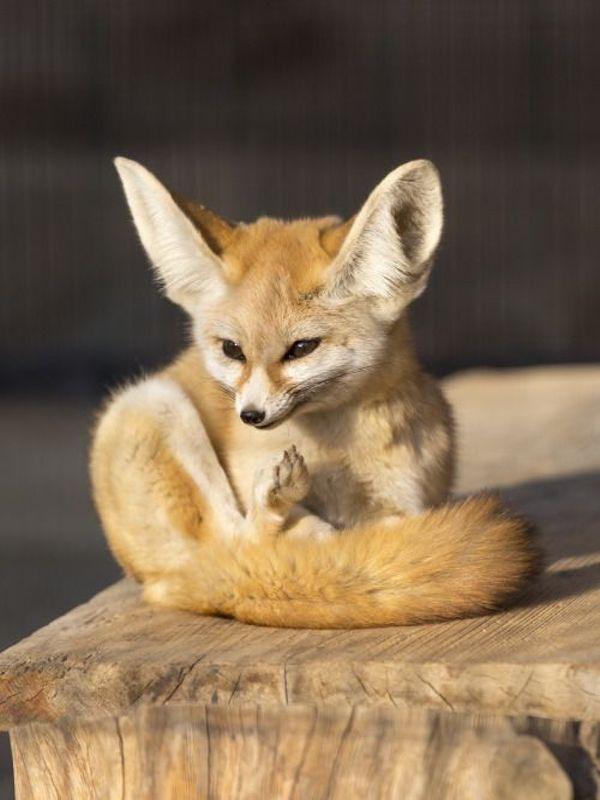 La tenencia de animales de compañía exóticos y sus consecuencias