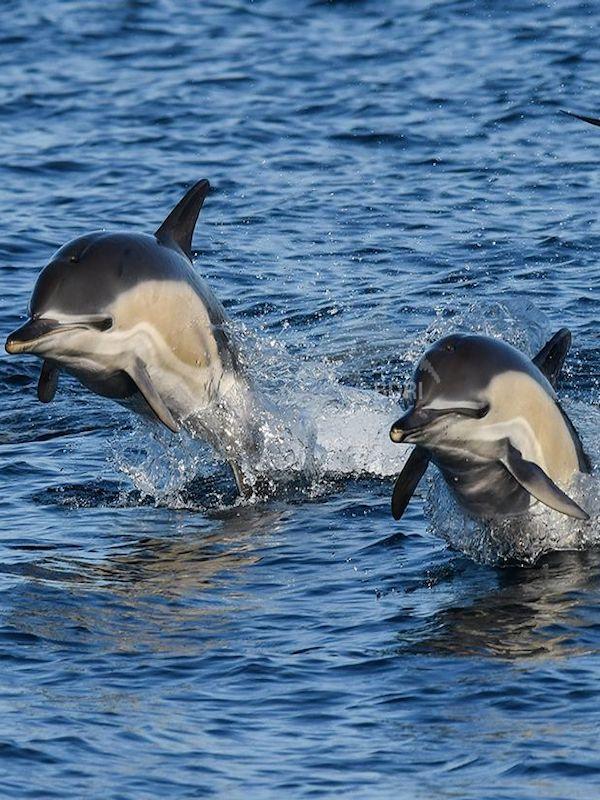 Buenas noticias en la lucha contra la captura accidental de cetáceos