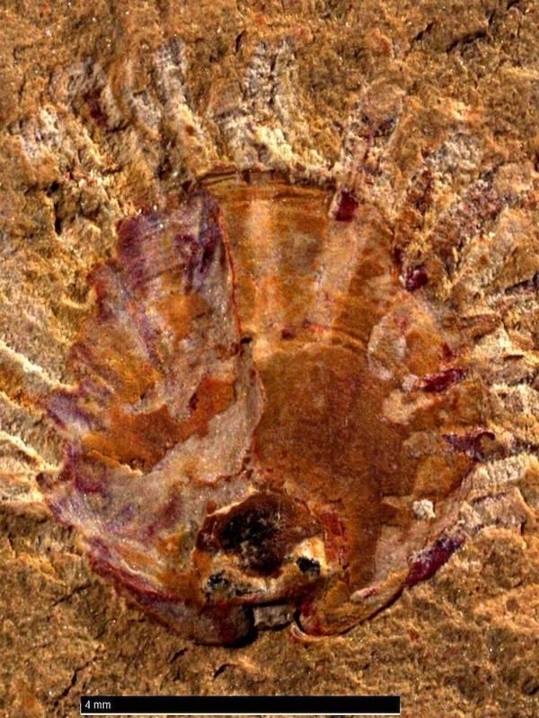 Estos animales marinos soportaron a los parásitos más antiguos que se conocen
