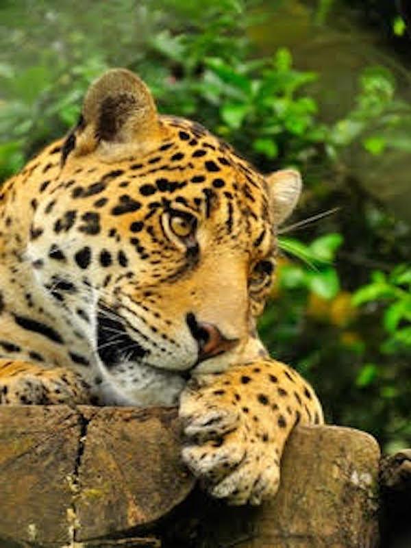 En el Día Mundial del Medio Ambiente la ONU avisa del inminente 'colapso' de la naturaleza