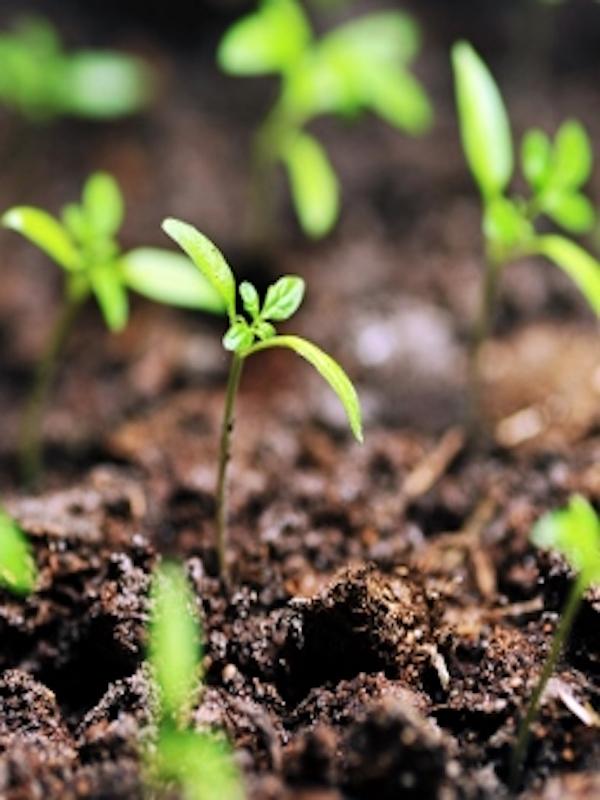 Comunitat Valenciana. El CAECV pone en marcha una campaña de promoción online para apoyar al sector ecológico