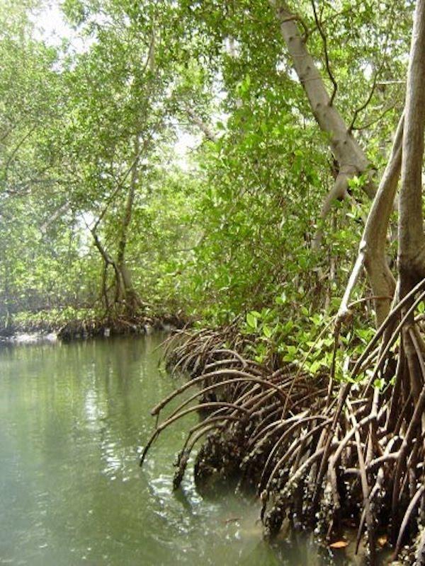 Bye, bye, manglares