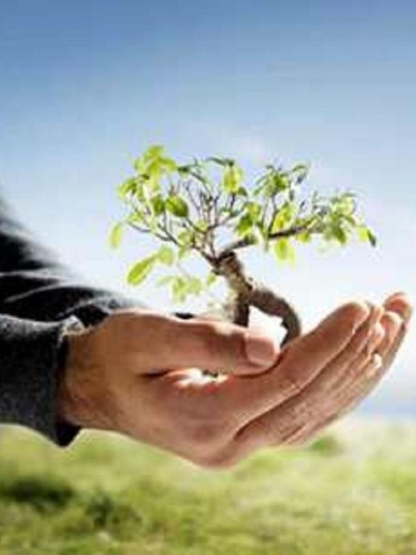 Reactivación económica y protección al medio ambiente y a la salud deben ir de la mano en la nueva normalidad mexicana