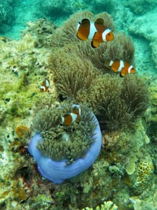 Día Mundial de los Océanos, la mitad de los españoles han cambiado sus hábitos de consumo de pescado