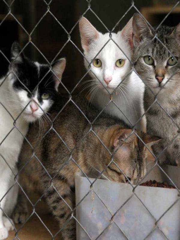 Un gato 'eutanasiado' por la paliza de su dueño