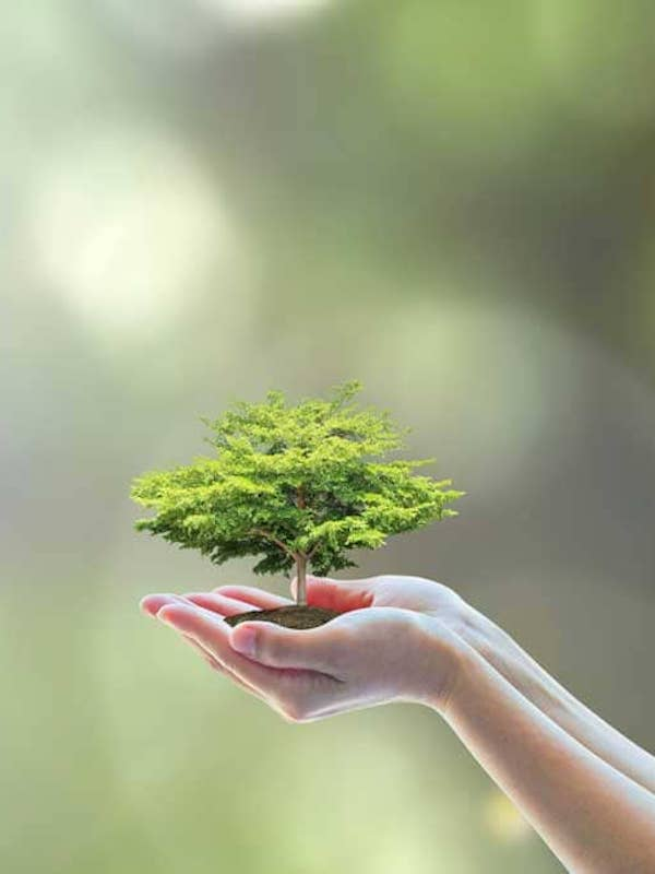IV Foro Medio Ambiente y Sostenibilidad se celebrará en junio de 2021