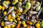 Tecnología verde para dar nueva vida a los residuos agroalimentarios