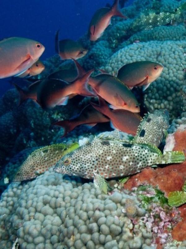 México desea proteger los océanos bajo una visión socioambiental