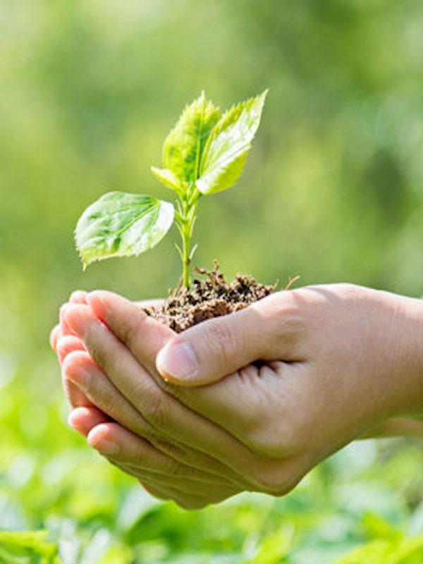 Gobierno de España: 'La recuperación solo puede ser verde y azul, con soluciones basadas en la naturaleza'