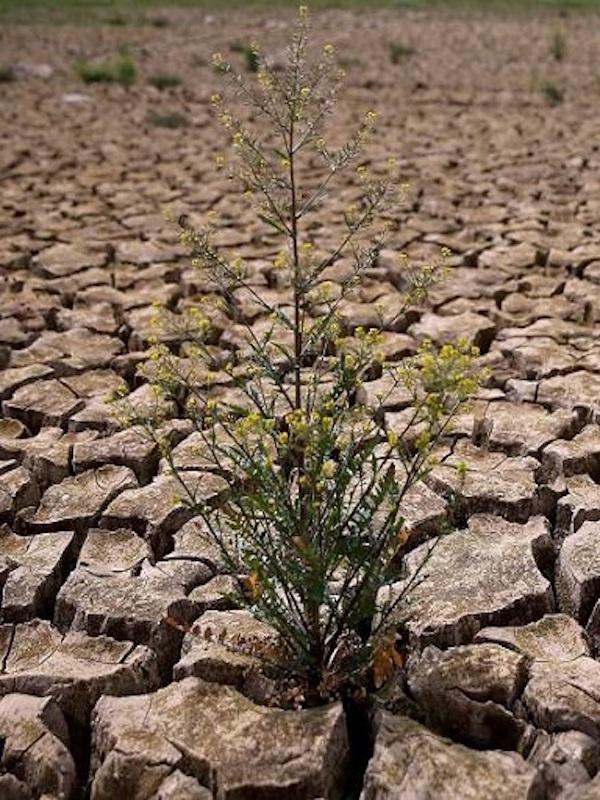 Hay que dar un giro de 360º a la economía para no ignorar la pandemia del cambio climático