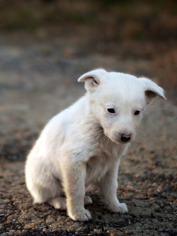 Hay que endurecer, sí o sí, las penas y sanciones por abandono y maltrato animal