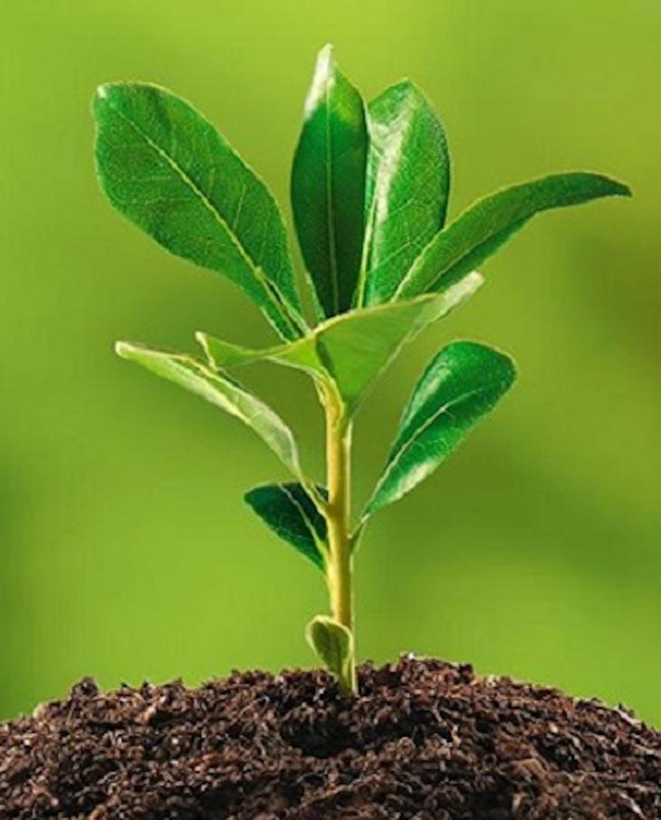 El COVID-19 acelera una década los compromisos ambientales